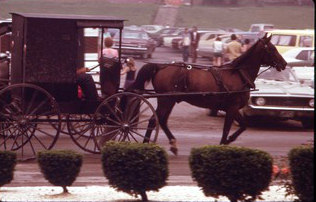 AMISH_HORSE_AND_BUGGY